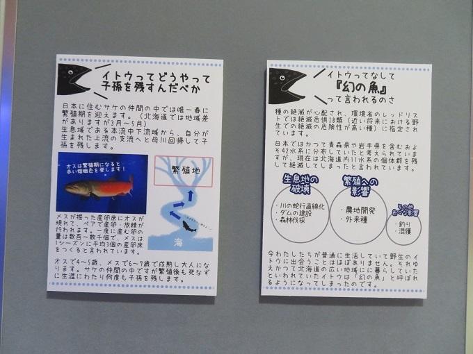 イトウの紹介 (2)