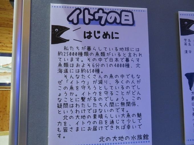 イトウの紹介 (3)