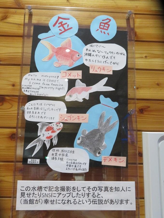金魚の紹介