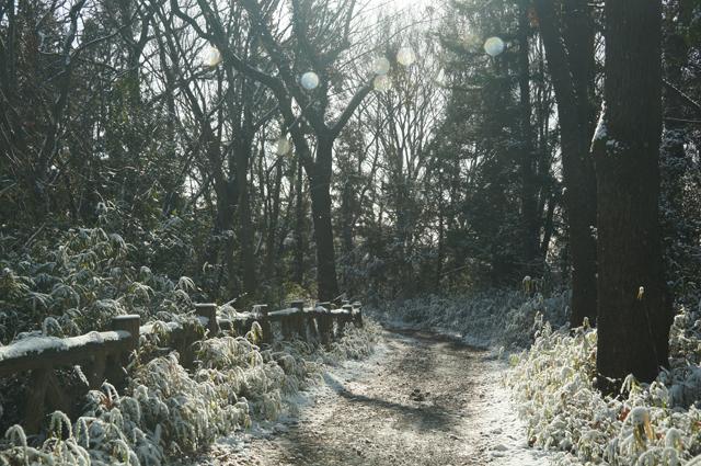 長沼の尾根道