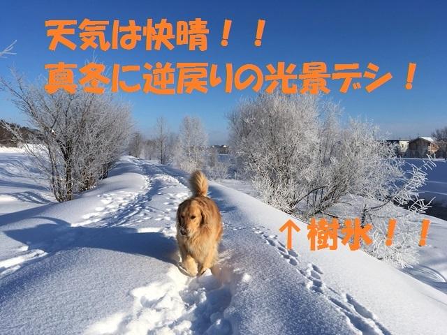 IMG_7384_PPP.jpg
