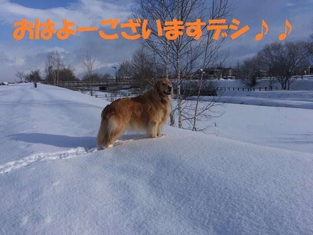 IMG_7495_PPP.jpg