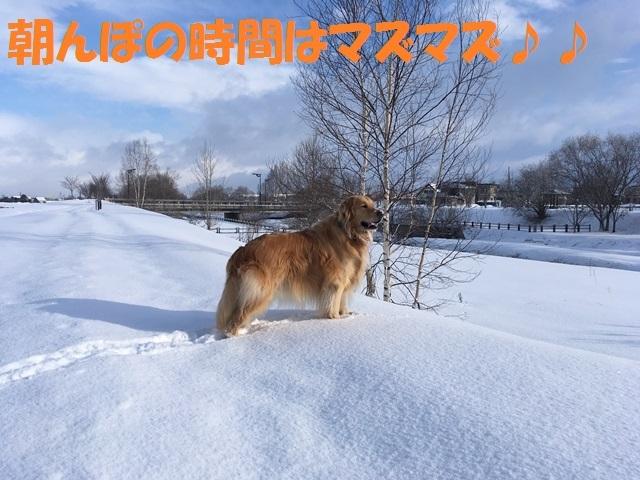 IMG_7497_PPP.jpg