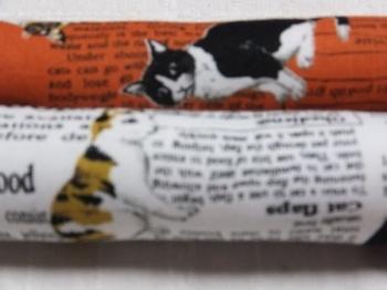 猫と新聞1