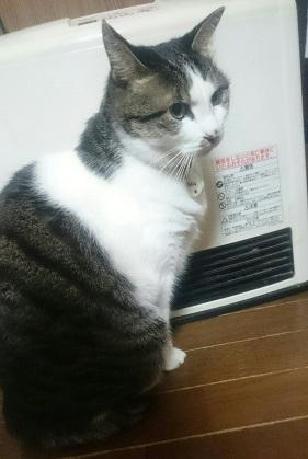 uchinoko1.jpg