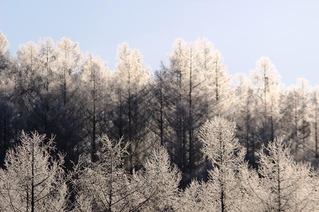 ブログ霧氷