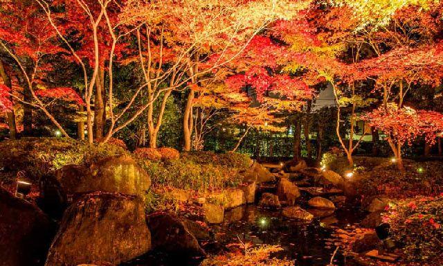 大田黒公園 ライトアップ