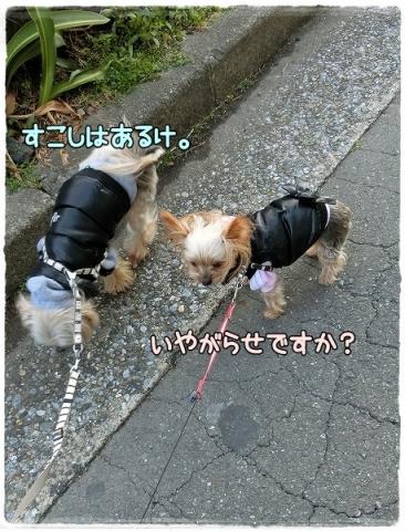 散歩事情④