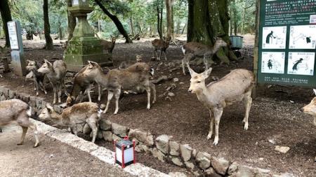 奈良旅行_2019_2_17