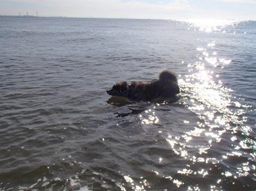 稲毛浜11