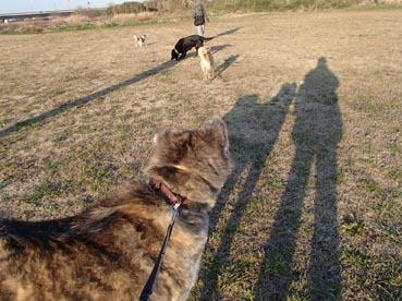 犬と遊ぶ?2