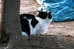 Deko The Cat