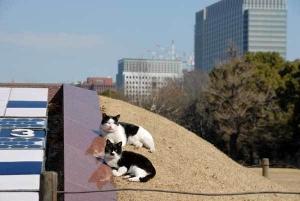 Deko and Boko The Cats