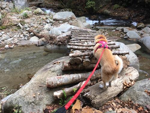 日川渓谷竜門峡14
