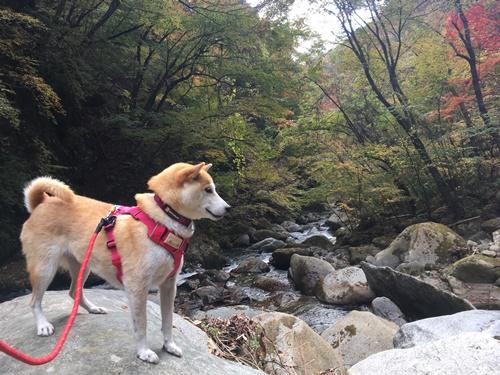 日川渓谷竜門峡18