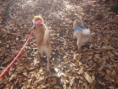 クウちゃんとおでかけ(フルーツ公園でランチと公園散歩)