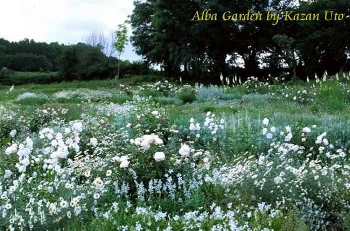 albagarden700.jpg
