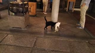 20180910法善寺横丁(その8)