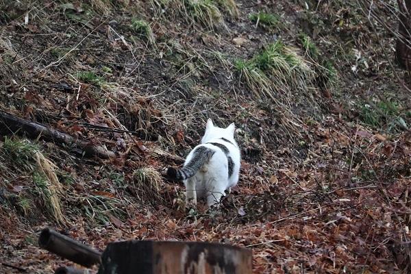 飛び猫12