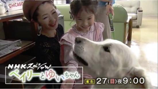 セラピー犬ベイリーとゆいちゃん01