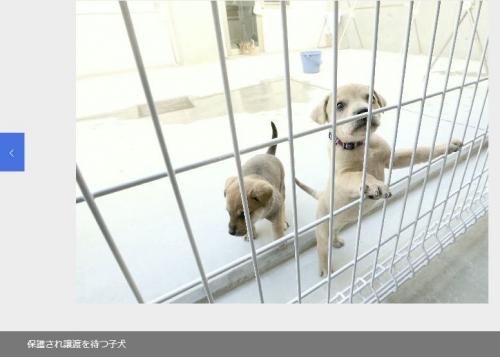 19-02-04動物愛護センター002