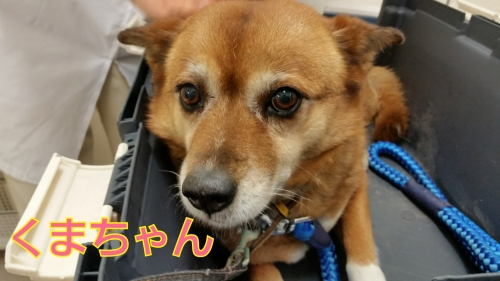 クマちゃん19-03-04