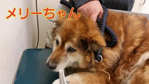 メリーちゃん19-03-04