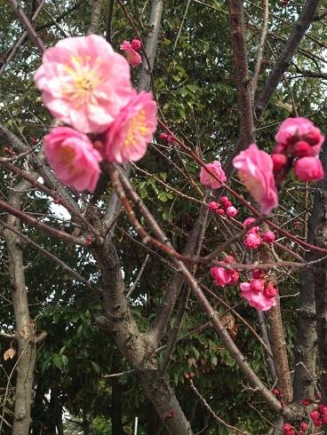 春が近づいてきましたね 2019