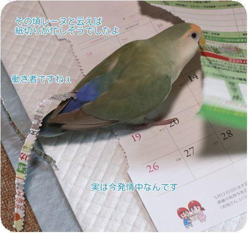 ④紙切りで忙しい
