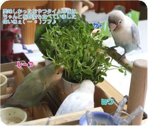 ③お野菜も…