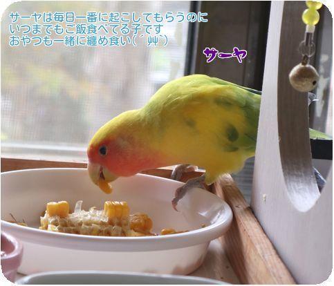 ②サーヤ朝ご飯