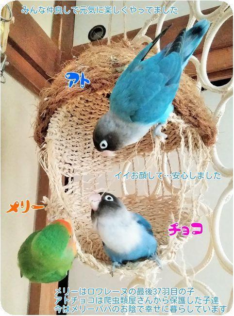 ①3鳥仲良し