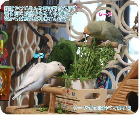 ①朝の野菜