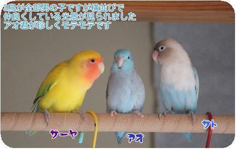 ③3鳥の変化
