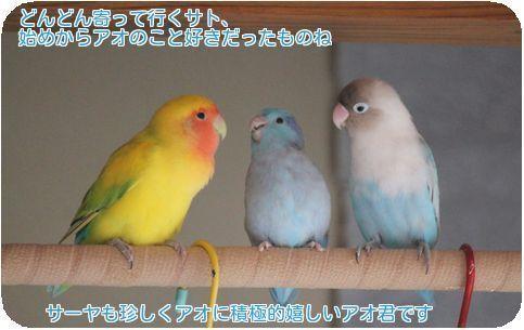 ④3鳥の変化