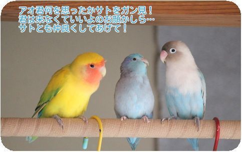 ⑤3鳥の変化