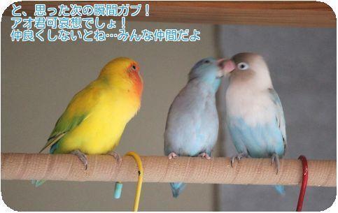 ⑥3鳥の変化