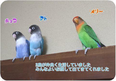 ③3鳥仲良し