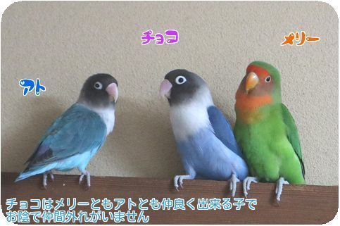 ④3鳥仲良し