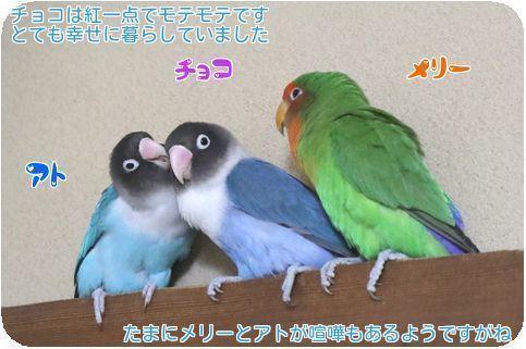 ⑤3鳥仲良し