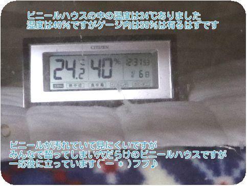 ⑥ハウス内温度
