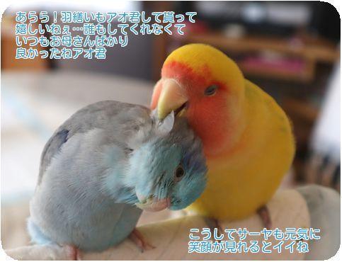 ④カミカミ羽繕い