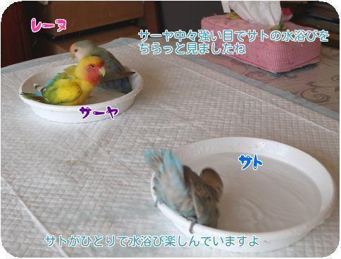 ①水浴び2