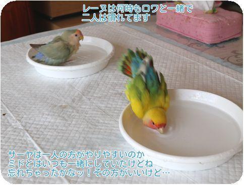 ⑤水浴び2