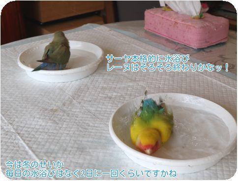 ⑥水浴び2