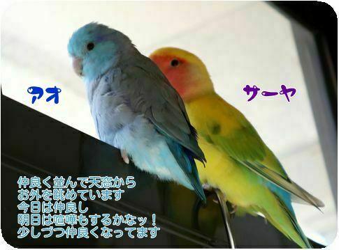 ①サーヤとアオ