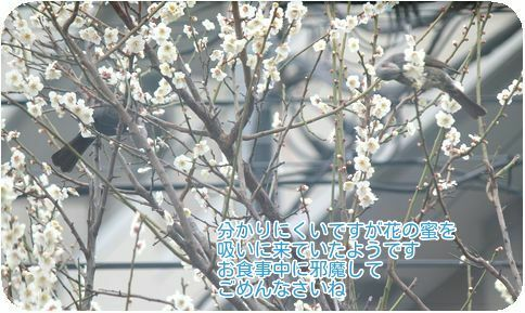 ⑨花の蜜を吸いに