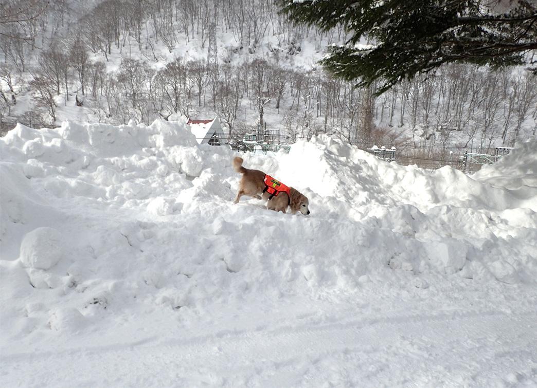 関東雪崩講習会 2019 (4)
