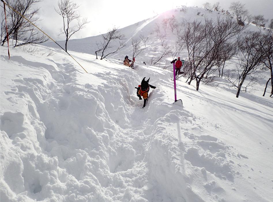 関東雪崩講習会 2019 (25)