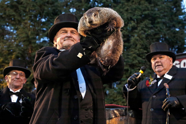 punxsutawney-phil-ground-hog-day.jpg